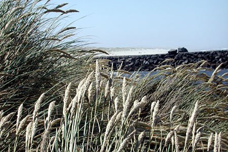 sea-and-grass