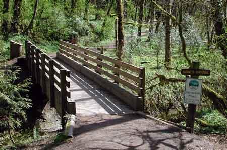 Obie's-Bridge