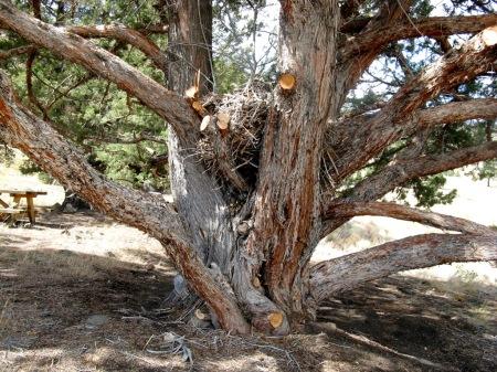 TreeAndNestWL