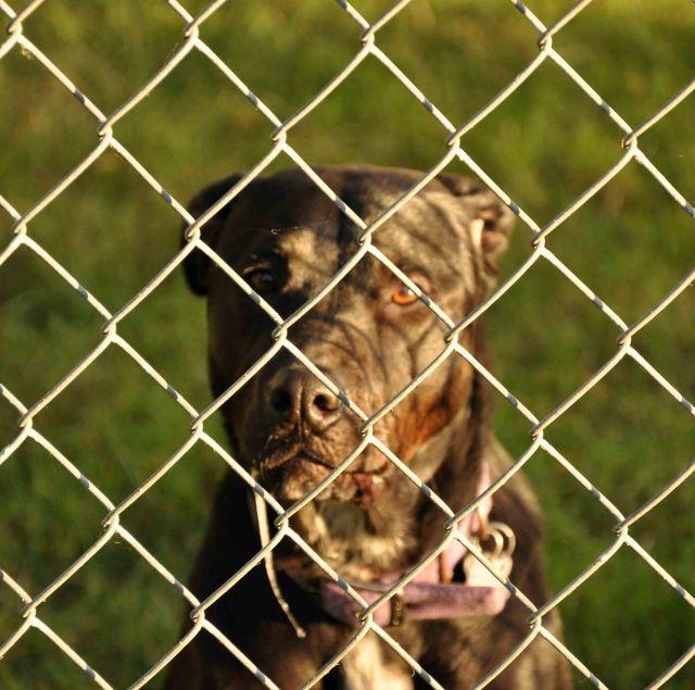 fenced dog for blog
