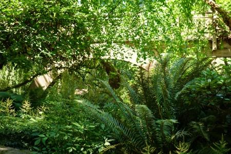 BRidgeThroughFoliage
