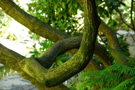 treeTrunk