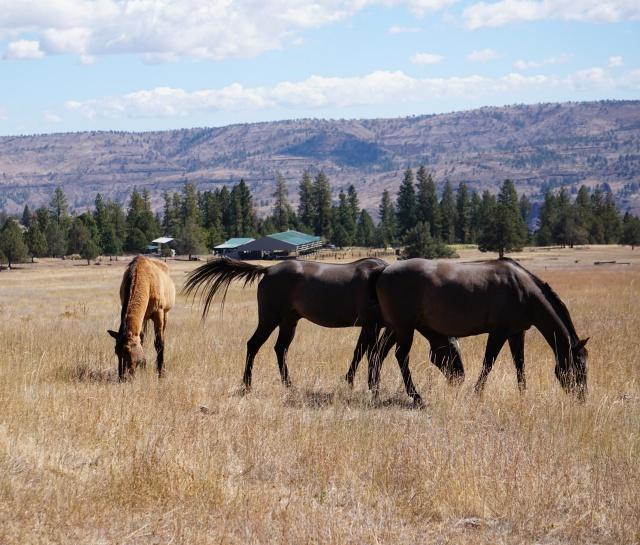 horsesalllandscape